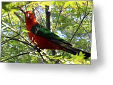 Parrot Greeting Card