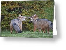 Patagonian Red Fox Greeting Card