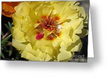 Portulaca Named Happy Hour Banana Greeting Card