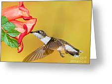 Ruby-throated Hummingbird Female Greeting Card
