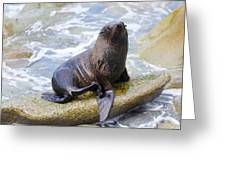 Sea Lion Greeting Card by Alexey Stiop