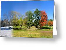 4 Season Trees In New Hampshire Greeting Card