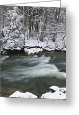 Snow Covered Pine Trees On The Side Of A River In The Winter. Greeting Card