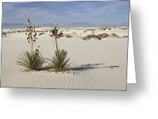 Soaptree Yucca In Gypsum Sand White Greeting Card