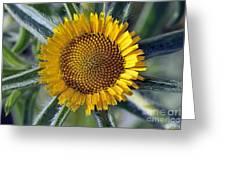 Spring Wild Flower Greeting Card
