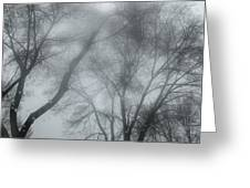 Storm Trees Greeting Card