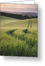 Summer Landscape Image Of Wheat Field At Sunset With Beautiful L Greeting Card