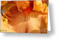 Tall Bearded Iris Named Penny Lane Greeting Card
