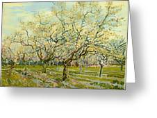 The White Orchard Greeting Card