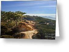 Torrey Pines State Park - California Greeting Card