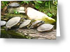 4 Turtles On A Log Greeting Card
