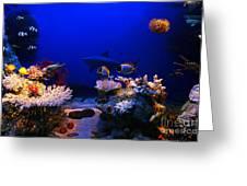 Underwater Scene Greeting Card