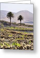 Vineyard On Lanzarote Greeting Card