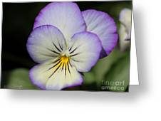Viola Named Sorbet Lemon Blueberry Swirl Greeting Card by J McCombie