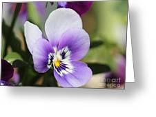 Viola Named Sorbet Marina Baby Face Greeting Card