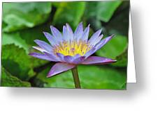 Water Lily 13 Greeting Card