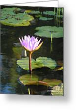 Pond Of Water Lily Greeting Card