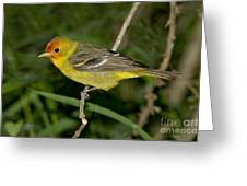 Western Tanager Greeting Card