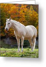 White Horse In Autumn Greeting Card