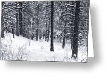 Winter In Pike National Forest Greeting Card