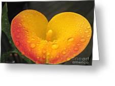 Zantedeschia Named Flame Greeting Card
