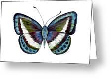 40 Danis Danis Butterfly Greeting Card