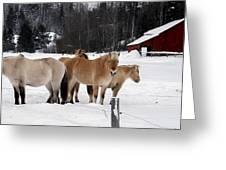 40104-5 Norwegian Horses Greeting Card