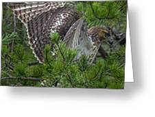 Red-tailed Hawk Greeting Card