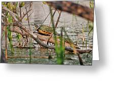 42- Florida Red-bellied Turtle Greeting Card