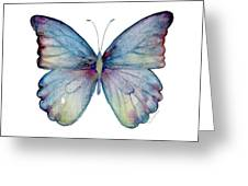 43 Blue Celestina Butterfly Greeting Card by Amy Kirkpatrick