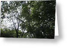Camera Peak Thru Nature Buy Faa Print Products Or Down Load For Self Printing Navin Joshi Rights Man Greeting Card