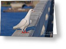 21- White Dove Greeting Card