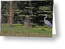 44- Alligator - Great Blue Heron Greeting Card