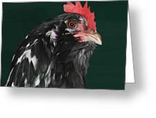 47. Bearded Hen Greeting Card