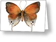 47 Mantoides Gama Butterfly Greeting Card by Amy Kirkpatrick