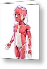 Human Muscular System Greeting Card