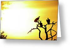 African Birds Greeting Card