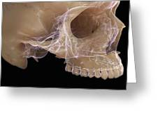 Anatomy Of The Skull Greeting Card
