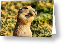 Black-tailed Prairie Dog Greeting Card