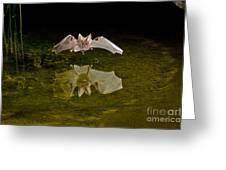 California Leaf-nosed Bat At Pond Greeting Card