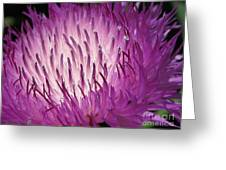 Centaurea From The Sweet Sultan Mix Greeting Card