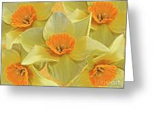5 Daffy's On Parade Greeting Card