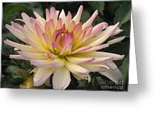 Dahlia Named Camano Ariel Greeting Card