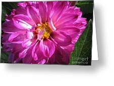 Dahlia Named Pink Bells Greeting Card