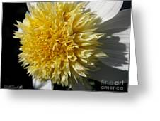 Dahlia Named Platinum Blonde Greeting Card