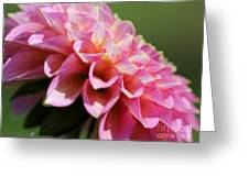 Dahlia Named Skipley Spot Of Gold Greeting Card