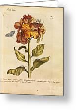 Erucarum Ortus Greeting Card