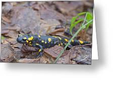 Fire Salamander Greeting Card