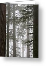 Foggy Coast Redwood Forest Greeting Card