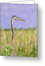 Great Blue Heron On The Prairie Greeting Card